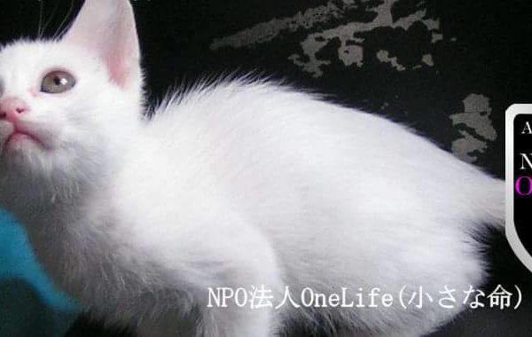 One Life(小さな命)